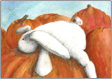 Mimi napping on pumpkins, giclee print